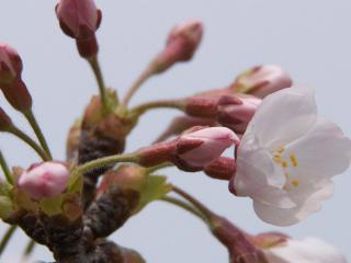 обои Начало цветения весной фото