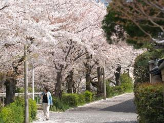 обои Пешеход в японском парке весной фото