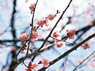 обои Скромное цветение ветвей дерева фото