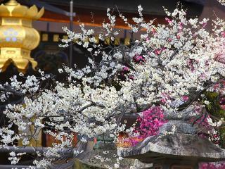 обои Цветущая ветка весеннего дерева над фигурами из бетона фото