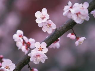 обои Шипы с цветками на ветке фото