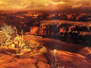 обои Сухое дерево и каньоны фото