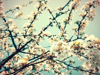 обои Весеннее цветение ветвей дерева в саду фото