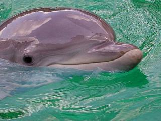 обои Умный дельфин фото