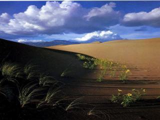 обои Пески и тени фото