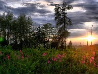 обои Цветы и молодые елочки в лучах заката фото