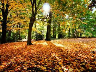 обои Солнце сквозь деревья в парке фото