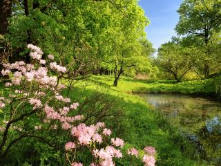 обои Весеннее цветение у водоема фото
