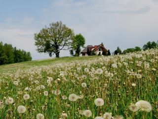обои Дом на краю села фото