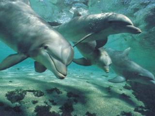 обои Четыре дельфина фото