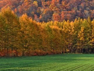 обои Осенний лес и свежие всходы на поле фото