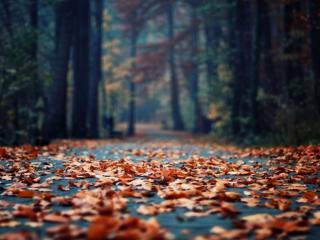 обои Дорожка из листьев фото