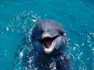 обои Разговорчивый дельфин фото