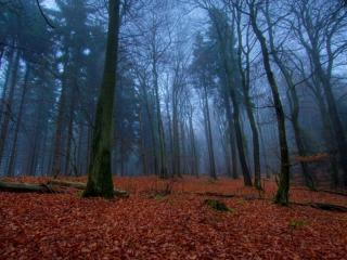 обои Осенняя печаль фото