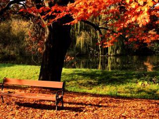 обои Лавочка под осеннем деревом у пруда фото
