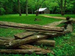 обои Домик лесника в зеленом лесу фото