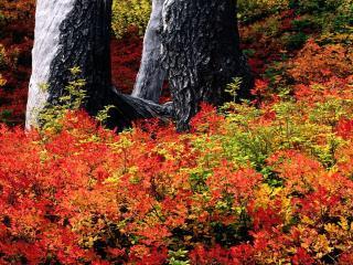 обои Осенние краски природы фото