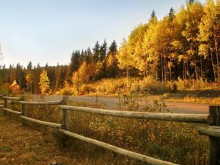 обои Лесная дорога и пожелтевшая листва фото
