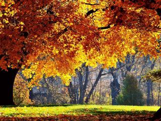 обои Парк в осенний солнечный день фото
