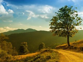 обои Дерево у грунтовой дороги фото