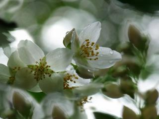 обои Цветы в тени фото
