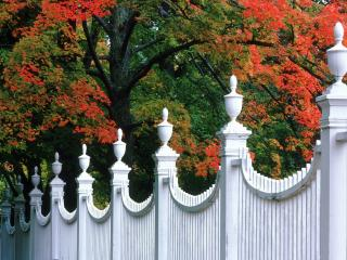 обои Дерево с красной листвой за белой оградой фото