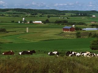 обои Коровы на окраине села фото