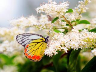 обои Бабочка на мелких цветках фото