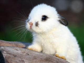 обои Малышка кролик фото