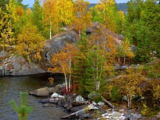 обои Нежная осень Карелии фото