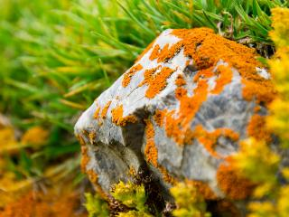 обои Камень покрытый оранжевым мхом фото
