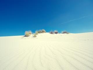 обои Белый песок и скудная зелень фото