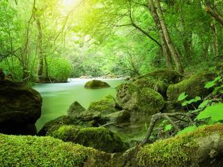 обои Ручей, в ярком зеленом весеннем лесу фото