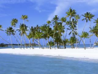 обои Пальмы на белом песке фото