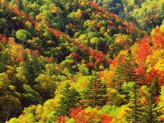 обои Яркие краски горного леса фото