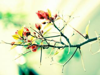 обои Красные цветки на ветке дерева фото
