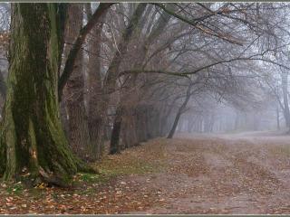обои Осенний туман фото