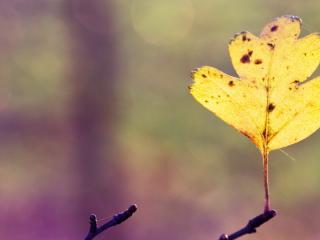 обои Листик желтый в одиночестве на ветке фото