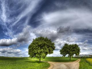 обои Два дерева у развилки дорог фото