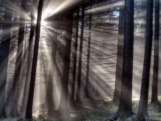 обои Лес разбудило солнышко фото