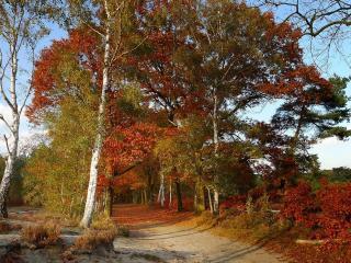 обои Осенняя алея фото