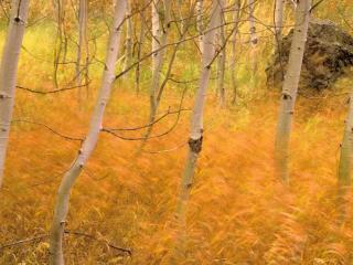 обои Травы сухие в молодом лесу фото