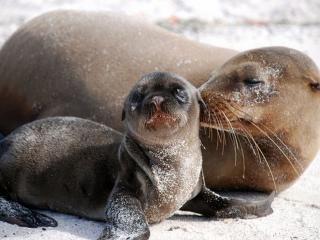 обои Детство морских животных фото