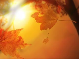 обои Опадающая листва фото