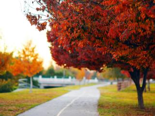 обои Разноцветная листва деревьев у дороги фото