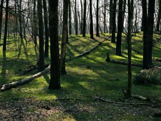 обои Сухие ветки на весенней траве фото