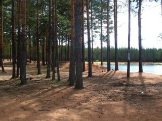 обои У озера хвойный лес фото