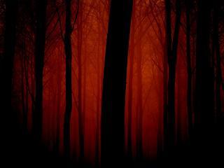 обои Силуэты деревьев на красном закате фото