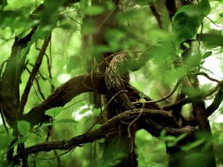 обои Зеленые ветви лианы фото