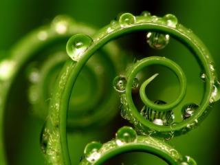 обои Завитки зеленых побегов с капельками росы фото